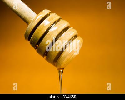 Honey Dipper Sweet Food Spreader Bee Sweet Food - Stock Image