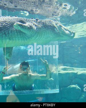 Tourist faces huge crocodile in the  'cage of death' at Crocosaurus Cove,Darwin, Northern Territory, Australia - Stock Image