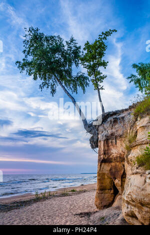 Birch tree on the cliff - Stock Image