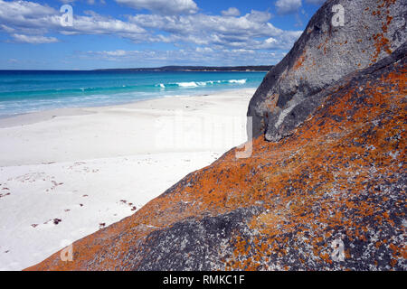 Orange lichen on coastal rocks, Taylors Beach, Bay of Fires, Tasmania, Australia - Stock Image