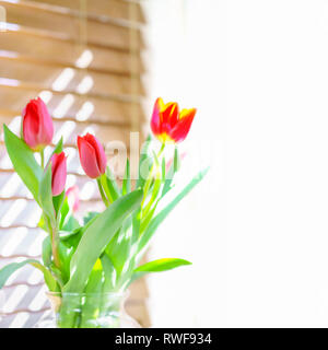Living coral and yellow spring tulips soft focus illustration empty white copy space for springtime, Easter, Mothers Day or other seasonal background. - Stock Image