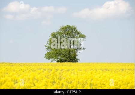 Summer Landscape, Wiltshire, UK. - Stock Image