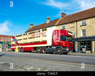 An Ian Mosey Scania Livestock Transporter passing through the town centre in Helmsley North Yorkshire England UK - Stock Image
