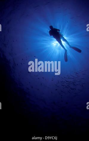 Silhouette of a scuba diver swimming underwater, Gaafu Alifu Atoll, Maldives - Stock Image