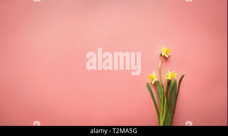 Pastel Easter eggs and white flower blossoms over a coral background with room for copy space. Image shot from top view. - Stock Image