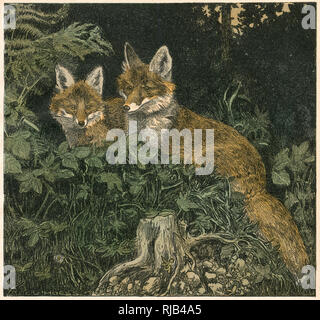 Two partially-grown fox cubs sitting in the undergrowth. - Stock Image