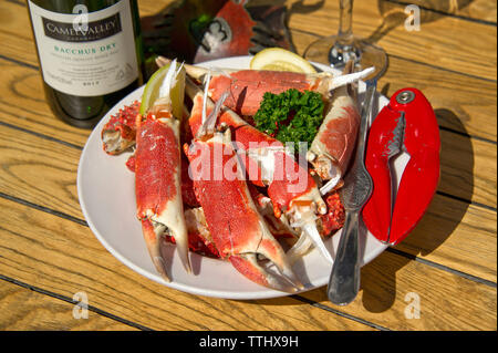 Spider crab - Stock Image