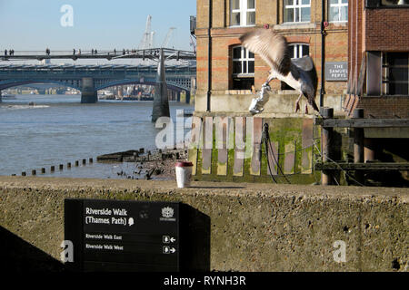 A seagull in flight snatching food scraps from a sandwich in tinfoil and view of Millennium Bridge over River Thames London England UK  KATHY DEWITT - Stock Image