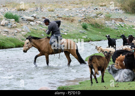 A herder trying to get his flock of sheep crossing a river in Khovd Province, Mongolia. - Stock Image