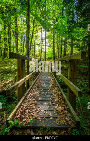 wooden bridge in forest - Stock Image