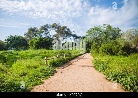 A path through the woods of Harhoura on spring, a dense forest close to Rabat - Stock Image