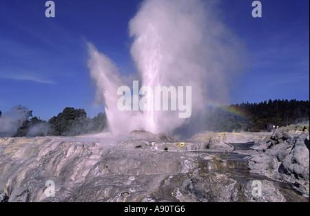 new zealand Rotorua Whakarewarewa Pohutu Geysir - Stock Image