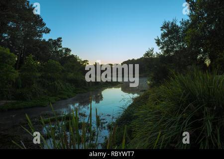morning light and a still pond - Stock Image