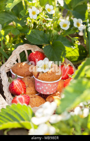 Muffins with strawberries in the garden with strawberries. - Stock Image