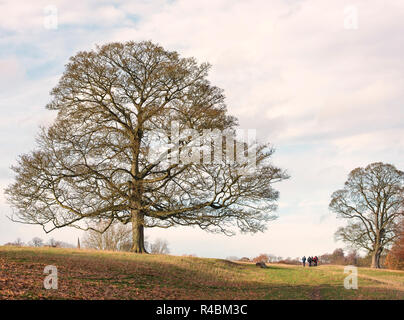Lone trees in the Derbyshire countryside Autumn leaf fall England UK - Stock Image