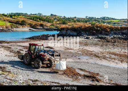 Schull, West Cork, Ireland. 15th Oct, 2018. A local farmer collects seaweed off Schull beach on a very warm and sunny day to fertilise his crops. The day will remain sunny with unsettled weather forecast for the rest of the week.  Credit: Andy Gibson/Alamy Live News. - Stock Image