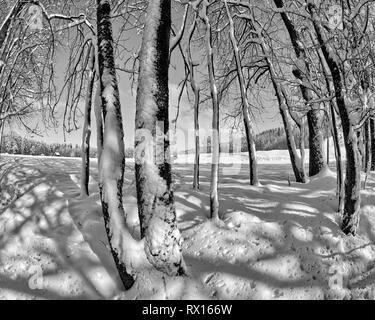 DE - BAVARIA: Winterscene near Bad Tölz - Stock Image