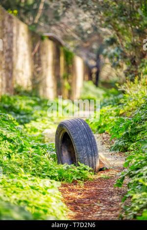 Dumped worn tire stuck in muddy soil pathway - Stock Image