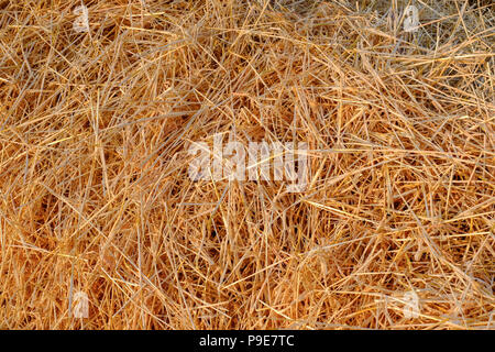 a close up view of cut straw in a field - Stock Image