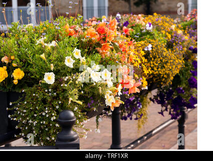 Close-up of a floral display at the Quay, Sandwich, Kent - Stock Image