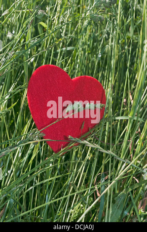 Heart in the grass - Stock Image