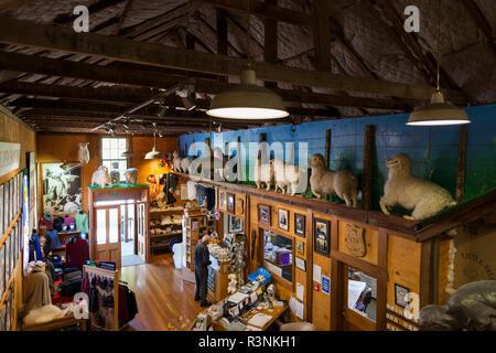 New Zealand, North Island, Masterton. The Wool Shed, National Museum of Sheep Shearing, interior - Stock Image