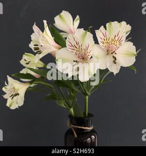 Alstroemeria Lily in a vase. - Stock Image