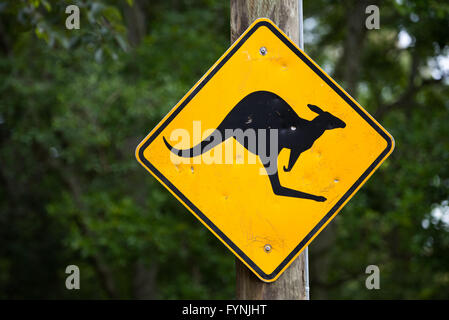 An iconic yellow and black road sign in the Australian outback warning of the risk of kangaroos on the road. - Stock Image