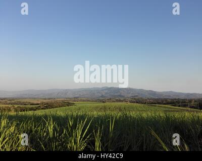 Scenic View Of Vineyard Against Clear Sky - Stock Image