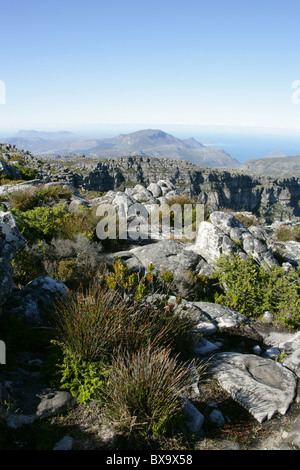 A View Across Table Mountain Towards the Twelve Apostles, Western Cape, South Africa. - Stock Image