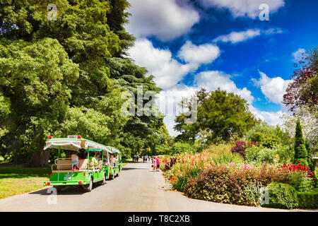 8 January 2019: Christchurch, New Zealand - Tourist train and pedestrian tourists admire the flowers in the herbaceous border, on a lovely summer day. - Stock Image