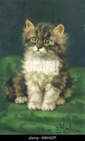 Cute Tricolored Tabby Kitten - Stock Image