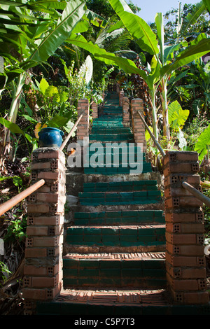 Staircase steps leading into up into tropical garden Thailand - Stock Image