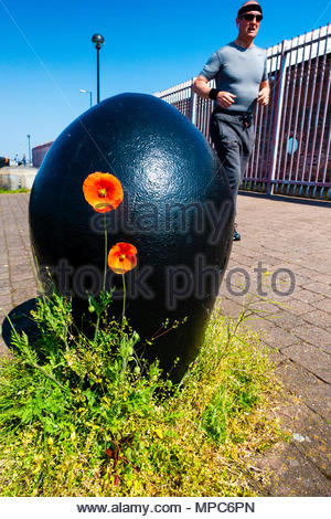 Red Poppy growing next to an old shipping or mooring bollard on the River Mersey docks, with a jogger in the background, Liverpool,  Merseyside, England on a very sunny day. Credit: Christopher Canty Photography/Alamy Live News - Stock Image