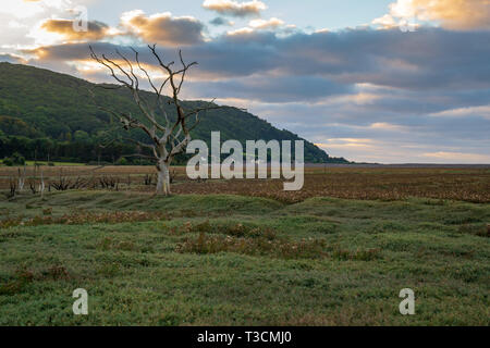 A tree trunk in the evening light over the Porlock Marshes, Somerset, England, UK - Stock Image
