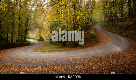 Photo in Autumn of road with hairpin going through Galtee Castle Woods, Limerick, Ireland - Stock Image