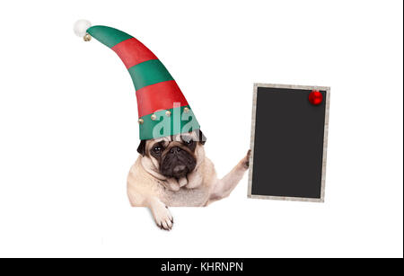 Christmas pug puppy dog with red and green elf hat holding up blank blackboard sign, hanging on white banner, isolated - Stock Image