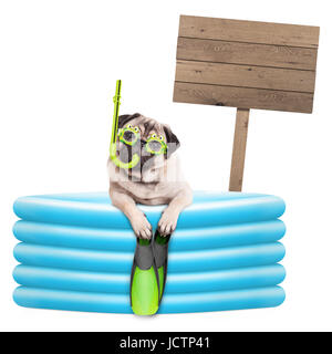 funny summer pug dog with goggles, snorkel and flippers in inflatable pool, with wooden sign isolated on white background - Stock Image