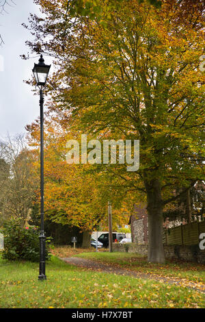 UK, England, Buckinghamshire, West Wycombe, Church Lane, autumnal beech trees and street lamp beside road - Stock Image