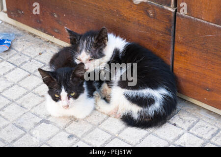 Italy Sicily Syracuse Siracusa Ortygia two sweet cute baby cats kittens black & white cuddle cuddling on floor by wooden doors - Stock Image