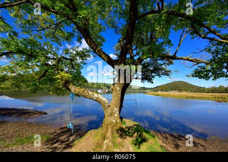 Rope swing attached to the branch of a tree,Ullswater lake,Lake District,Cumbria,England,UK - Stock Image