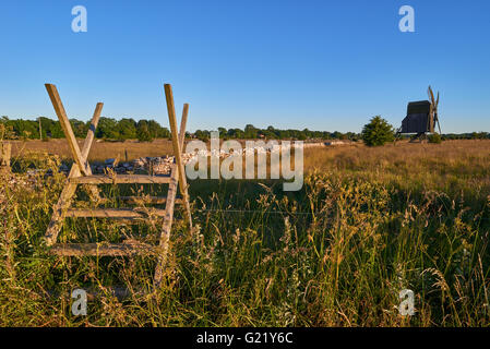 Alvar limestone moor with fence and old windmill in sunset at Isle if Oeland, province Kalmar, Sweden - Stock Image