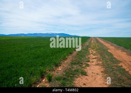 Cereal field and mountains. Cuevas de Ayllon, Soria province, Castilla Leon, Spain. - Stock Image