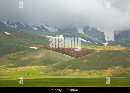 Snowy mountainsides and green meadows with horses, Pian Grande near Castelluccio, Monti Sibillini National Park, - Stock Image