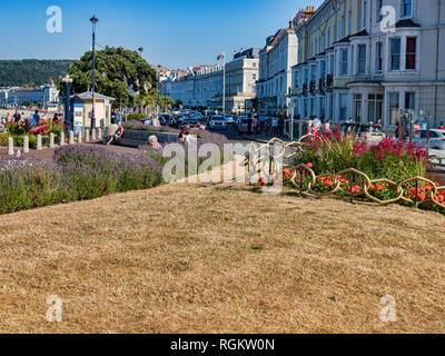 14 July 2018: Llandudno, Conwy, North Wales - Dried out grass in public gardens on Llandudno Promenade during the continuing heatwave of summer. - Stock Image