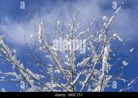 Nice winter day after fresh snow - Stock Image