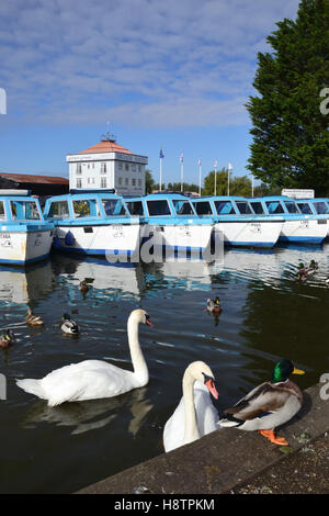 Moored dayboats, swans and ducks at Potter Heigham Staithe overlooked by Herbert Woods Tower on the River Thurne - Stock Image