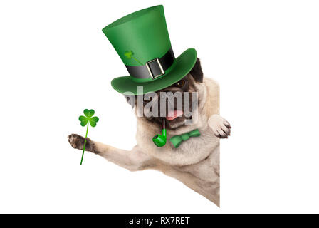 st patricks day pug puppy dog with green leprechaun hat and pipe, holding up shamrock clover, smiling sideways, isolated on white background - Stock Image