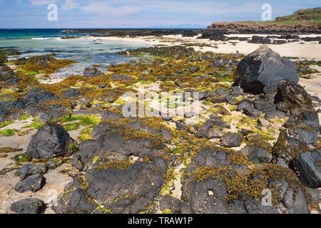 Ardnamurchan area, Western Highlands, Scotland, beach scene with mixed seaweeds on rocks, clean sandy beach - Stock Image