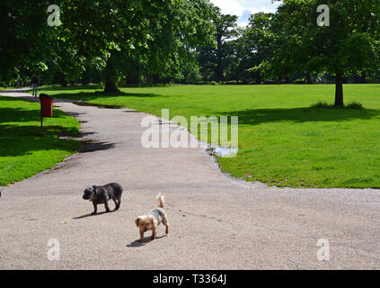 Dogs in Christchurch Park, Ipswich, Suffolk, UK - Stock Image
